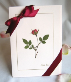Set of 4 Rose 5x7 Pink Cards