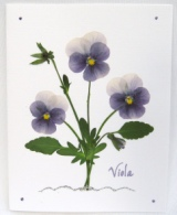 Lavender Viola Note Card