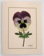 Pink Pansy Note Card