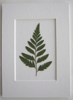 The Perfect Green Fern