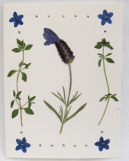 Spanish Lavender & Thyme Note Card