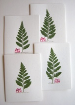 4 Christmas Tree Fern Cards With Red Package